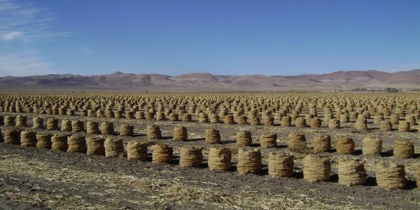 Nevada Revised Statutes >> Environmental Compliance
