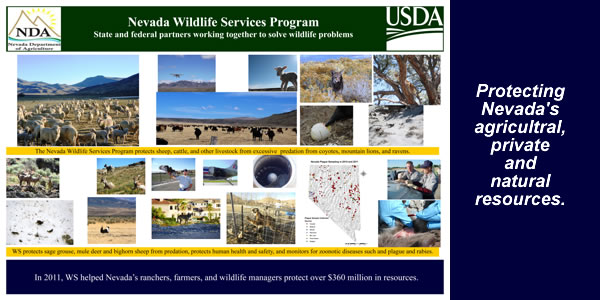 Nevada Wildlife Services