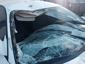 A vehicle was totaled after a collision with a horse near Dayton in Feb. 2014.